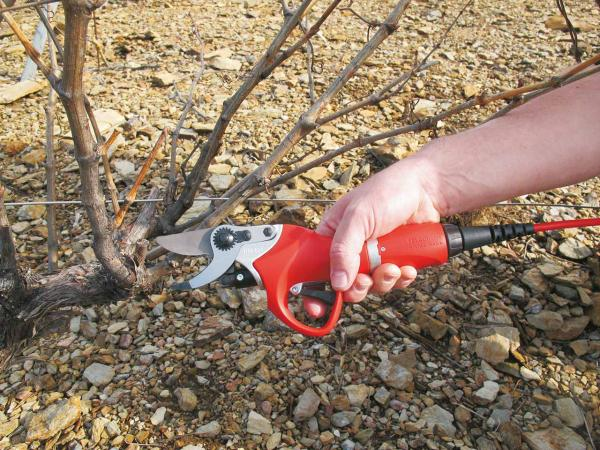The FELCO 801, the ideal electric pruning shear for intensive pruning work.